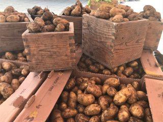 Perunoita torilla. Kokkolan kauppatori on suosittu kauppapaikka. Kesäisin torilla järjestetään useita tapahtumia.