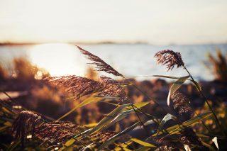 Kokkola on tunnelmallinen paikka nauttia meren läheisyydestä. Aurinko paistaa merellä ja valaisee ruokokasvit meren rannalla.