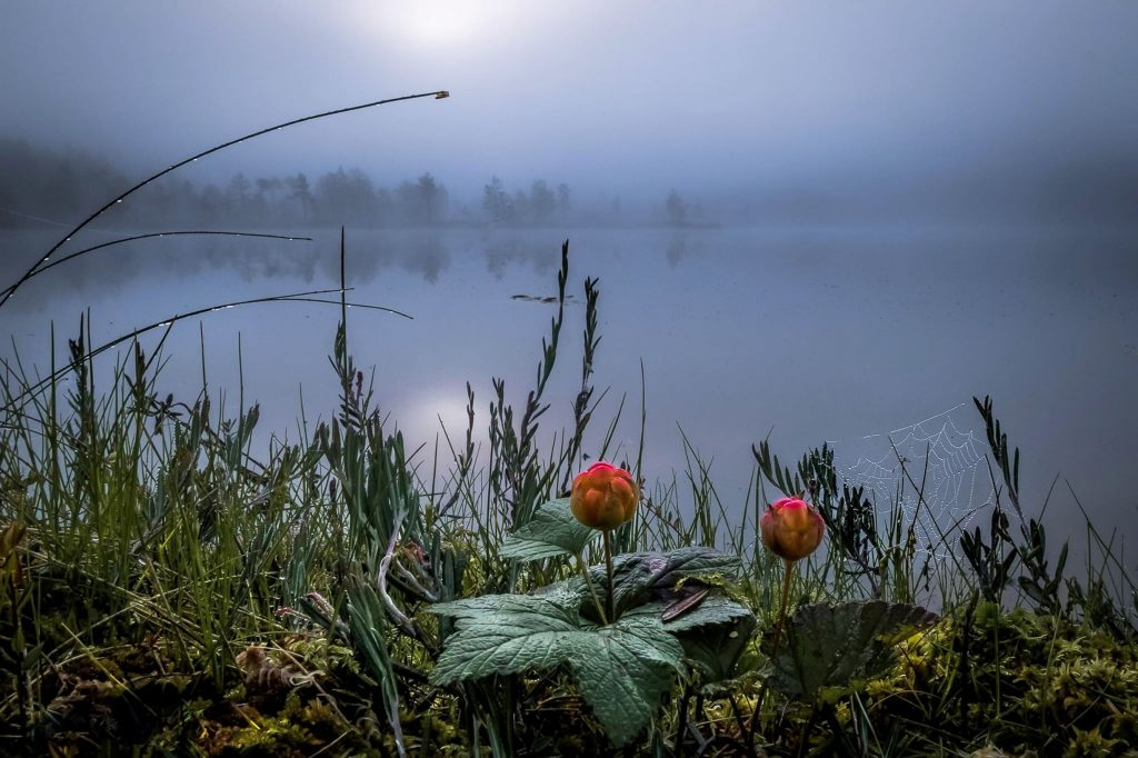Kuvaaja Asko Kuittinen. Kaunis kuva utuiselta rannalta, jossa kasvaa lakkoja. Visit Finland.